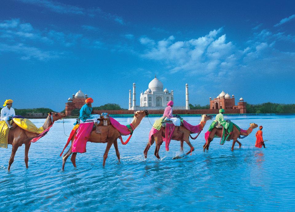 Camels-Taj