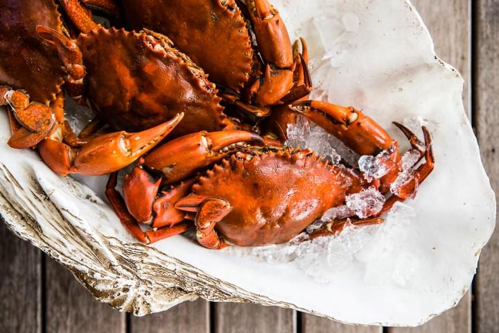 Kokomo-crab