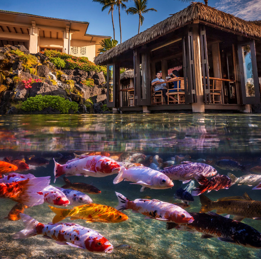 Restaurant-Grand-Hyatt-Kauai-resized